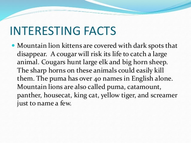 What is a cougar's life cycle?