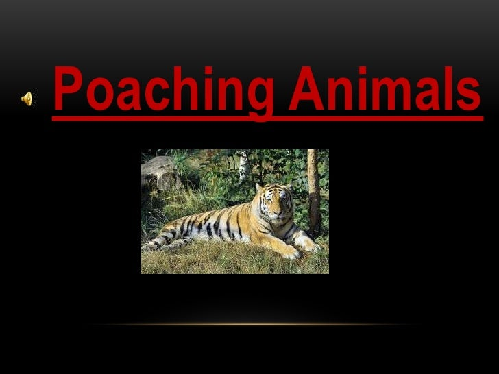 Poaching Animals      Title       By: