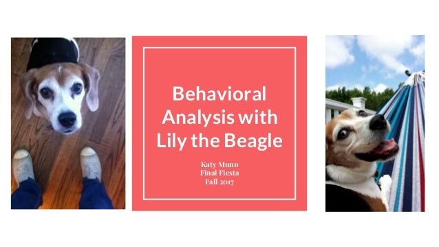 Behavioral Analysis with Lily the Beagle Katy Munn Final Fiesta Fall 2017