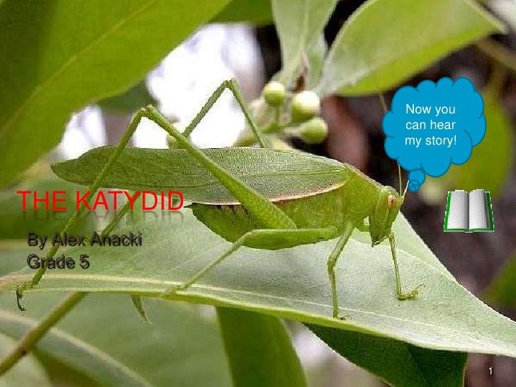 Now you can hear my story!<br />The Katydid<br />By Alex Anacki<br />Grade 5<br />1<br />