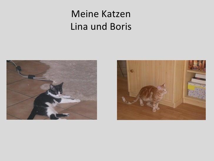 Meine Katzen Lina und Boris