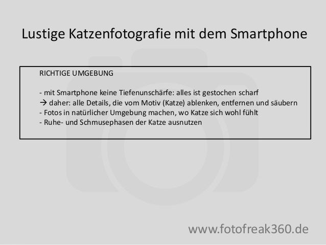 Lustige Katzenfotografie mit dem Smartphone www.fotofreak360.de RICHTIGE UMGEBUNG - mit Smartphone keine Tiefenunschärfe: ...