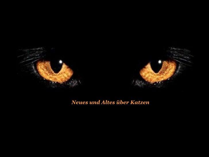 Neues und Altes über Katzen