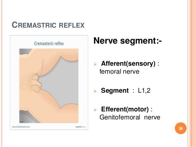 how to avoid cremasteric reflex