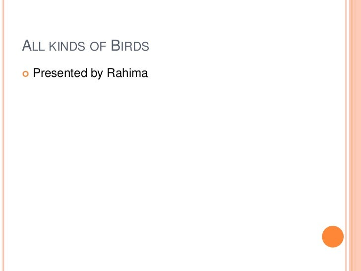 ALL KINDS OF BIRDS   Presented by Rahima