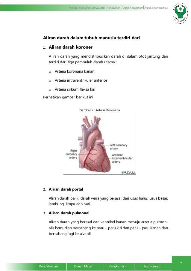Anatomi Fisiologi Sistem Kardiovaskuler Limfe Peredaran