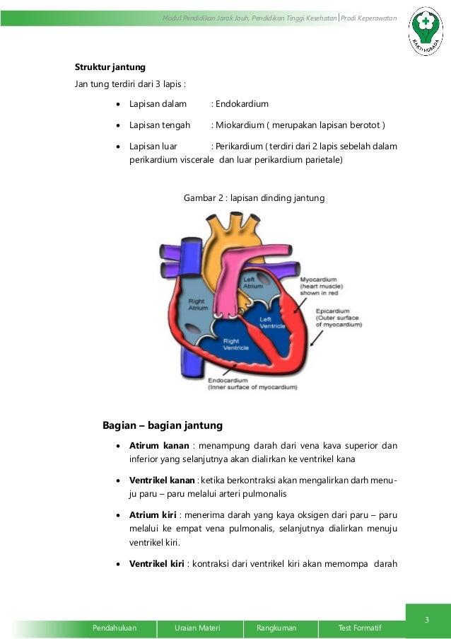 Anatomi dan fisiologi sistem kardiovaskuler ebook
