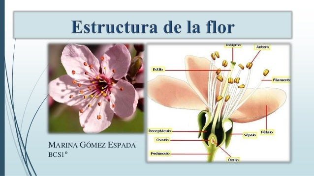 MARINA GÓMEZ ESPADA BCS1º