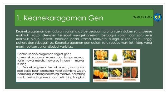 Keanekaragaman Gen Jenis Dan Ekosistem