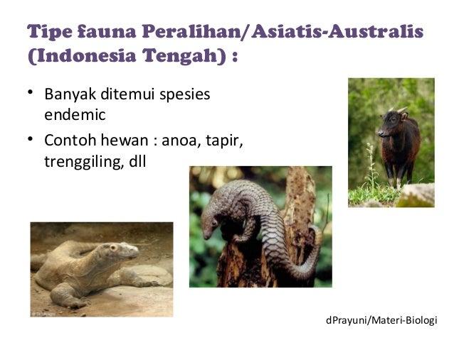 96 Koleksi Gambar Hewan Asiatis Australis Dan Peralihan Terbaru