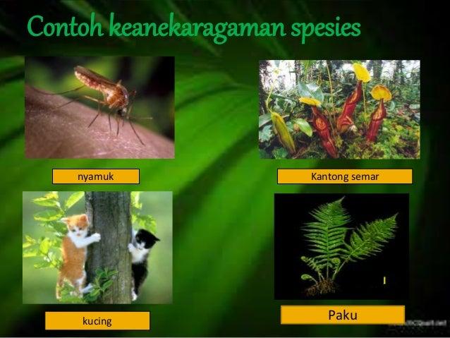 Contoh Ekosistem Dalam Ilmu Biologi - Virallah