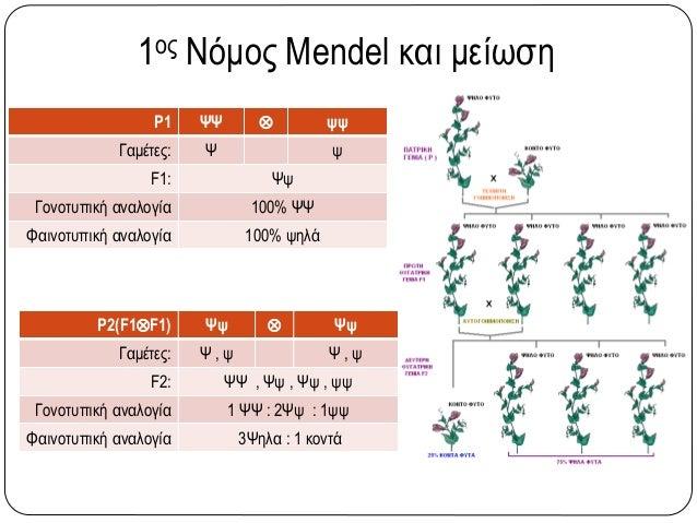 1ος Νόμος Mendel και μείωση P1 ΨΨ  ψψ Γαμέτες: Ψ ψ F1: Ψψ Γονοτυπική αναλογία 100% ΨΨ Φαινοτυπική αναλογία 100% ψηλά P2(F...