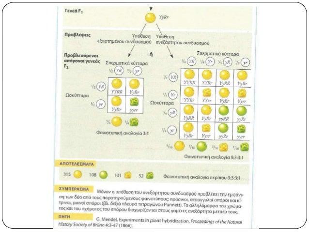 Ατελώς επικρατή  Ο γονότυπος των ετερόζυγων ατόμων είναι ενδιάμεσος μεταξύ των δύο ομόζυγων.  Στην F2 γενιά, η αναλογία ...