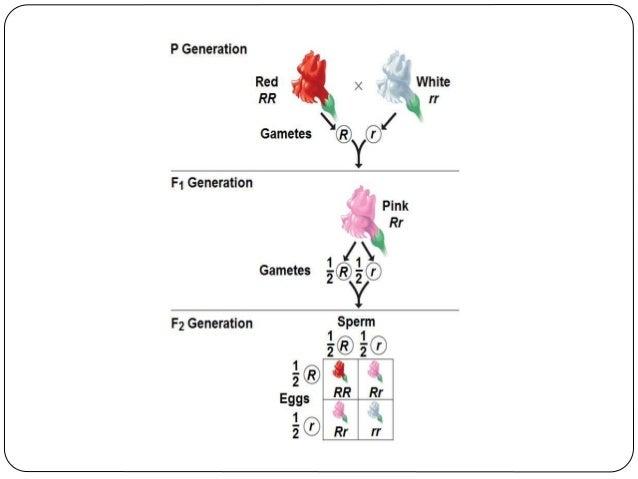 Ομάδες αίματος  Το γονίδιο Ι, που καθορίζει τις ομάδες αίματος, έχει τρία αλληλόμορφα που εδράζονται στην ίδια θέση των ο...