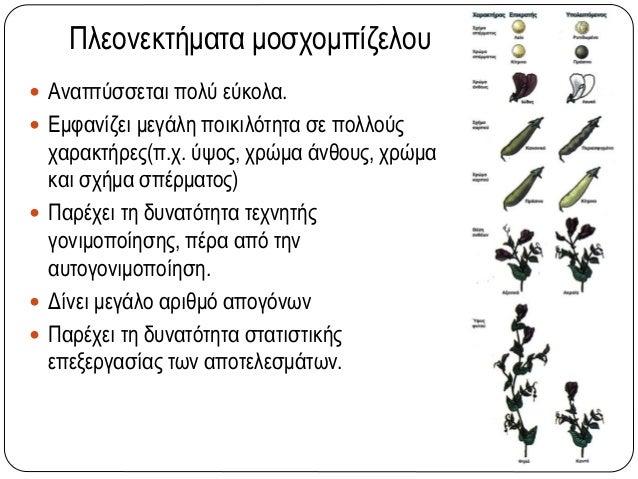 Πλεονεκτήματα μοσχομπίζελου  Αναπτύσσεται πολύ εύκολα.  Εμφανίζει μεγάλη ποικιλότητα σε πολλούς χαρακτήρες(π.χ. ύψος, χρ...