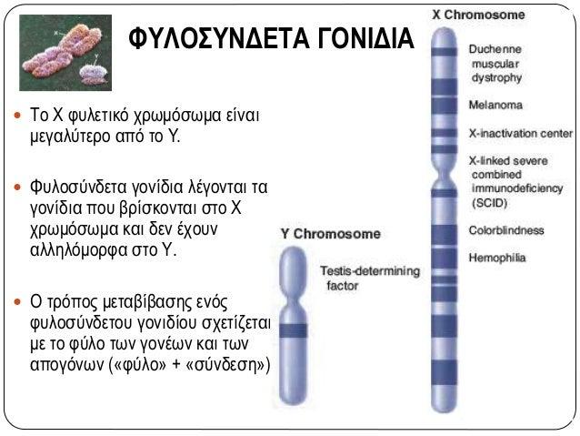 Γραμμή τριχοφυίας με κορυφή: αυτοσωμικός επικρατής χαρακτήρας Γ: τριχοφυία με κορυφή, γ: τριχοφυία χωρίς κορυφή