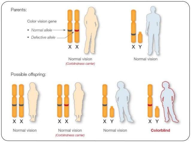 Αυτοσωμική επικρατής κληρονομικότητα Οικογενής υπερχοληστερολαιμία: Α: το γονίδιο που σχετίζεται με την ασθένεια, α: το φυ...
