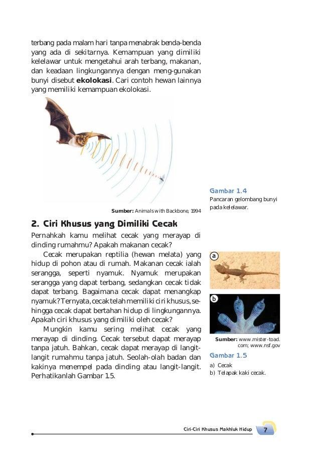 50 Gambar Burung Elang Dan Kelelawar HD