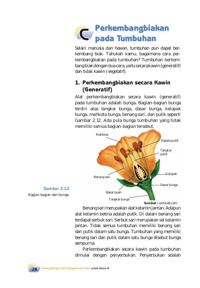Gambar Bagian Bunga Matahari Dan Cara Penyerbukannya Tema 1 Kelas 6 Berbagai Bagian Penting