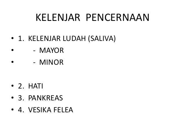 KELENJAR PENCERNAAN • 1. KELENJAR LUDAH (SALIVA) • - MAYOR • - MINOR • 2. HATI • 3. PANKREAS • 4. VESIKA FELEA