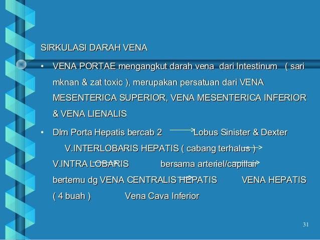 Kelenjar saliva pangkreas hepar dan kandung empedu for V portae hepatis