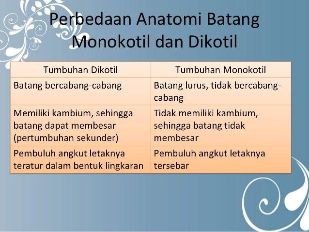 Perbedaan Struktur Anatomi Akar Monokotil Dan Dikotil Berbagai Struktur
