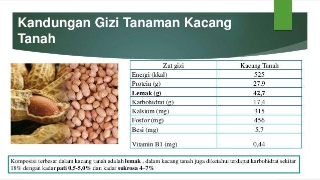 Biokimia Pangan Tanaman Kacang Kacangan