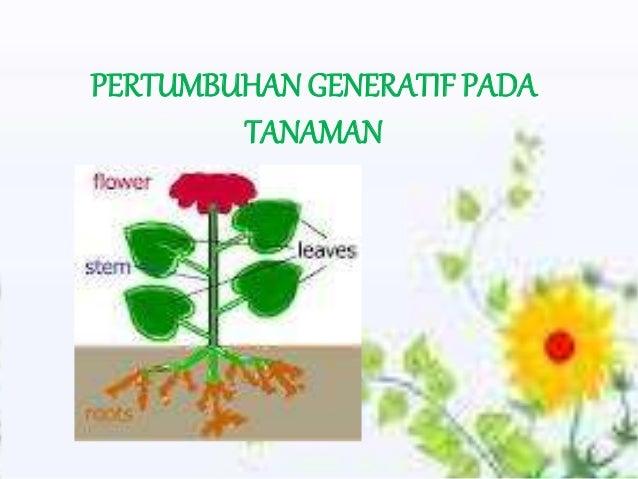 Pertumbuhan Generatif Pada Tanaman