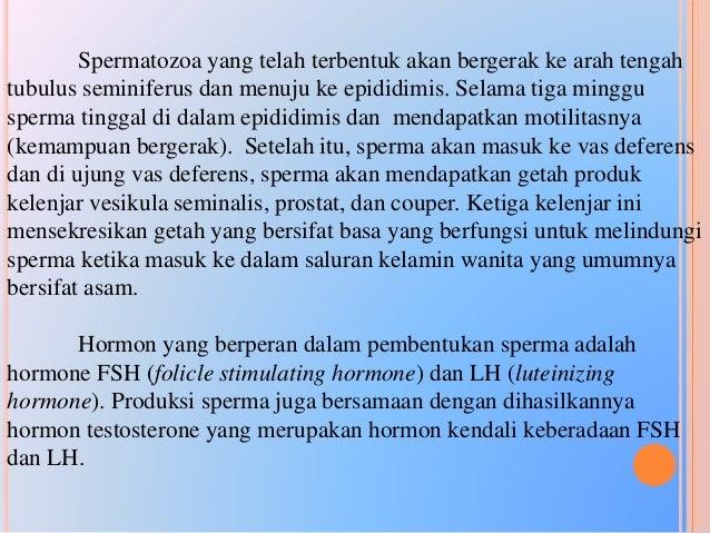 Ada 3 perbedaan antara oogenesis dan spermatogenesis yaitu : •Sitokinesis : selama pembelahan meiosis, oogenesis mengalami...