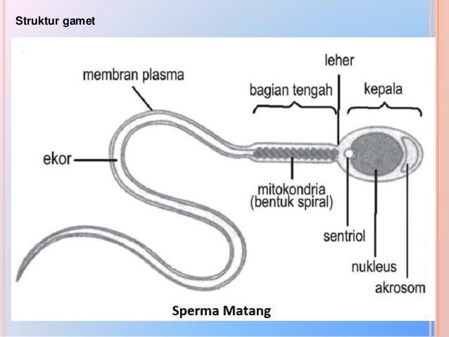 Gambar Siklus Hormonal
