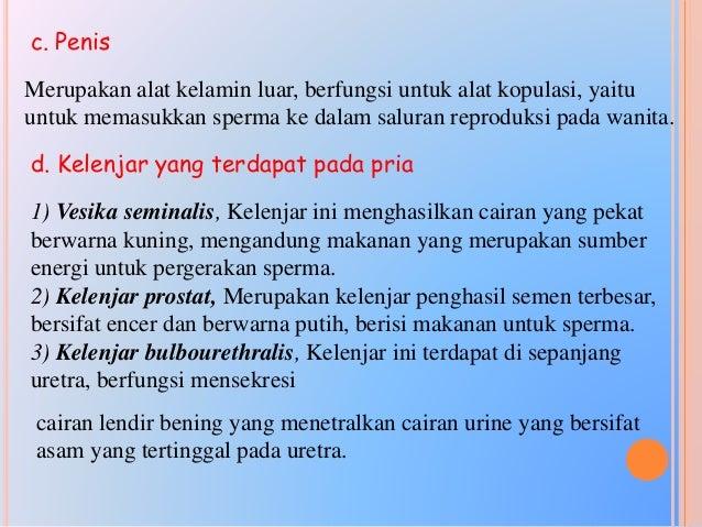 2. Organ Reproduksi Wanita a. Ovarium (indung telur) Jumlahnya 1 pasang, terletak di dalam rongga perut, berfungsi untuk p...