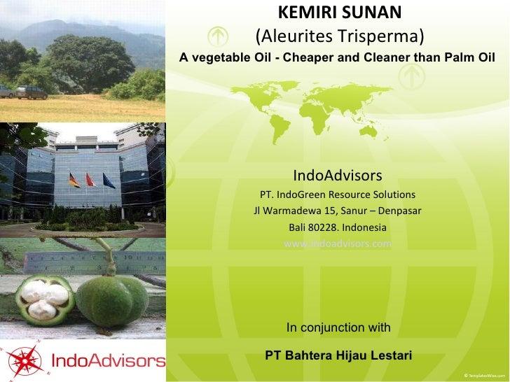 KEMIRI SUNAN (Aleurites Trisperma) IndoAdvisors PT. IndoGreen Resource Solutions Jl Warmadewa 15, Sanur – Denpasar Bali 80...