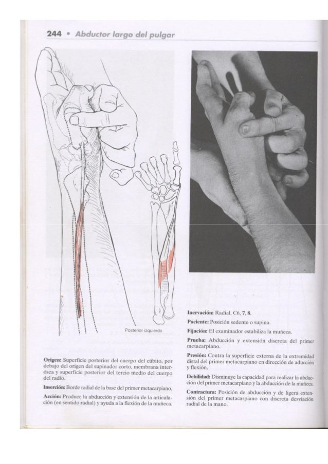 Kendall\'s músculos, pruebas,_funciones_y_dolor_postural_2