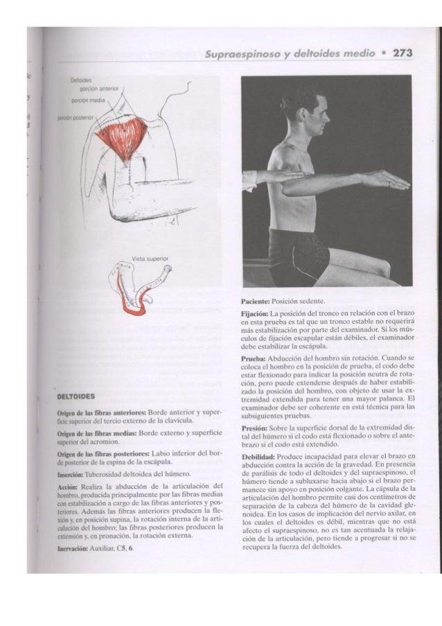 Kendall's músculos, pruebas,_funciones_y_dolor_postural_2