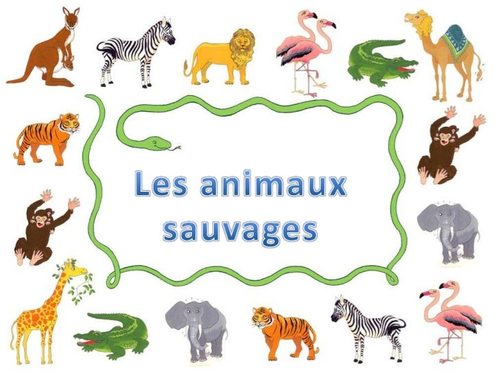 Les animaux sauvages<br />