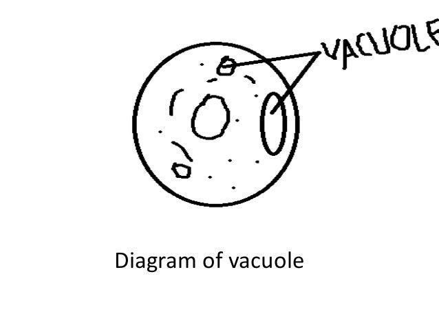 Vacuole easy drawing