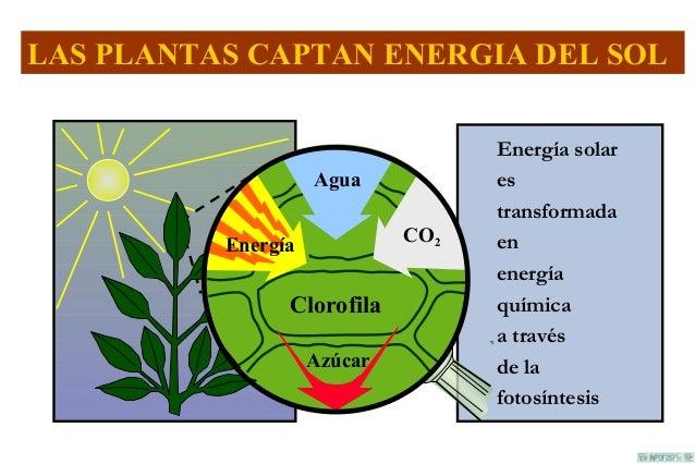 Respiracion y fotosintesis de la planta 76