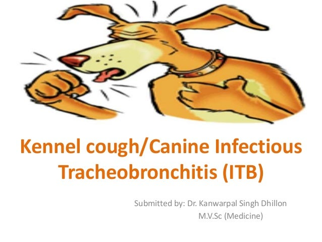 Kennel cough/Canine Infectious Tracheobronchitis (ITB) Submitted by: Dr. Kanwarpal Singh Dhillon M.V.Sc (Medicine)