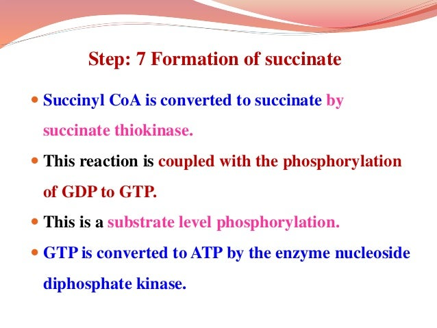 Step: 7 Formation of succinate  Succinyl CoA is converted to succinate by succinate thiokinase.  This reaction is couple...
