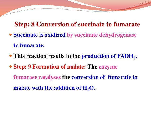 Step: 8 Conversion of succinate to fumarate  Succinate is oxidized by succinate dehydrogenase to fumarate.  This reactio...