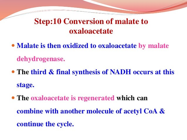 Step:10 Conversion of malate to oxaloacetate  Malate is then oxidized to oxaloacetate by malate dehydrogenase.  The thir...