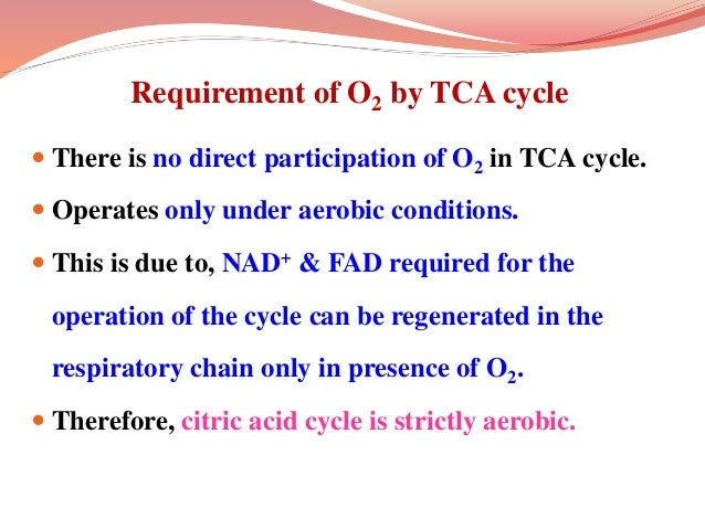 Requirement of O2 by TCA cycle  There is no direct participation of O2 in TCA cycle.  Operates only under aerobic condit...