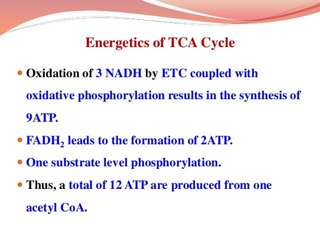 Energetics of TCA Cycle  Oxidation of 3 NADH by ETC coupled with oxidative phosphorylation results in the synthesis of 9A...