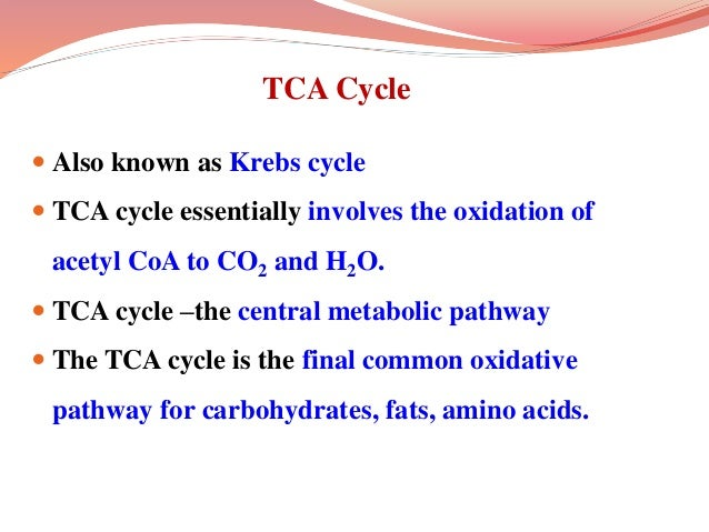 TCA Cycle  Also known as Krebs cycle  TCA cycle essentially involves the oxidation of acetyl CoA to CO2 and H2O.  TCA c...