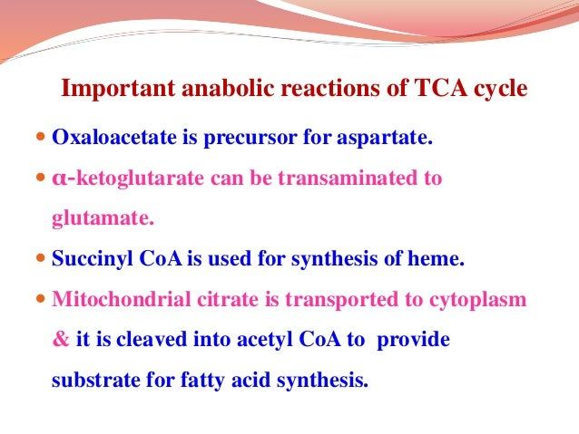 Important anaplerotic reactions  Pyruvate carboxylase catalyses conversion of pyruvate to oxaloacetate.  This is an ATP ...