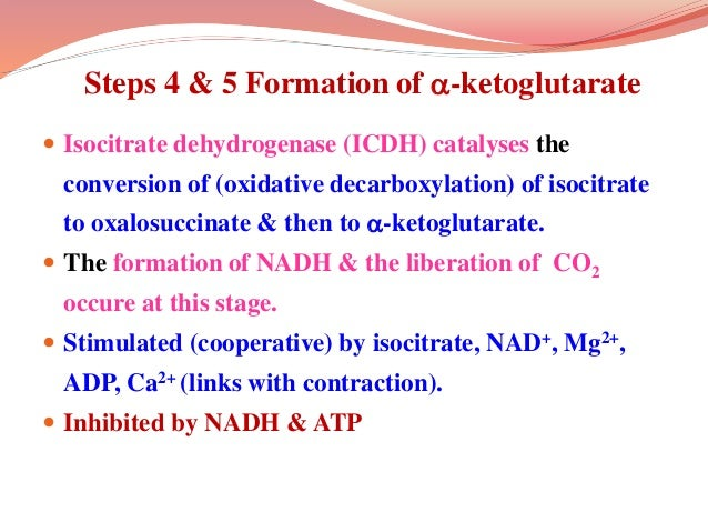 Steps 4 & 5 Formation of -ketoglutarate  Isocitrate dehydrogenase (ICDH) catalyses the conversion of (oxidative decarbox...