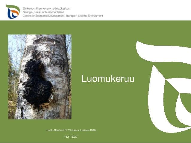 Luomukeruu 16.11.2020 Keski-Suomen ELY-keskus, Laitinen Riitta