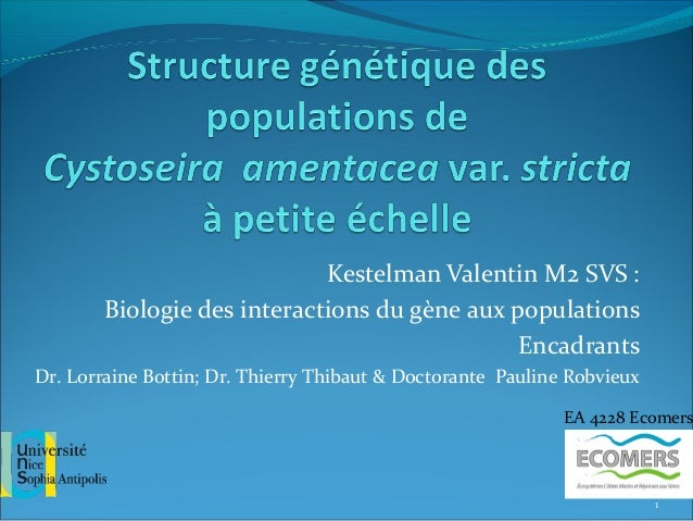Kestelman Valentin M2 SVS :Biologie des interactions du gène aux populationsEncadrantsDr. Lorraine Bottin; Dr. Thierry Thi...