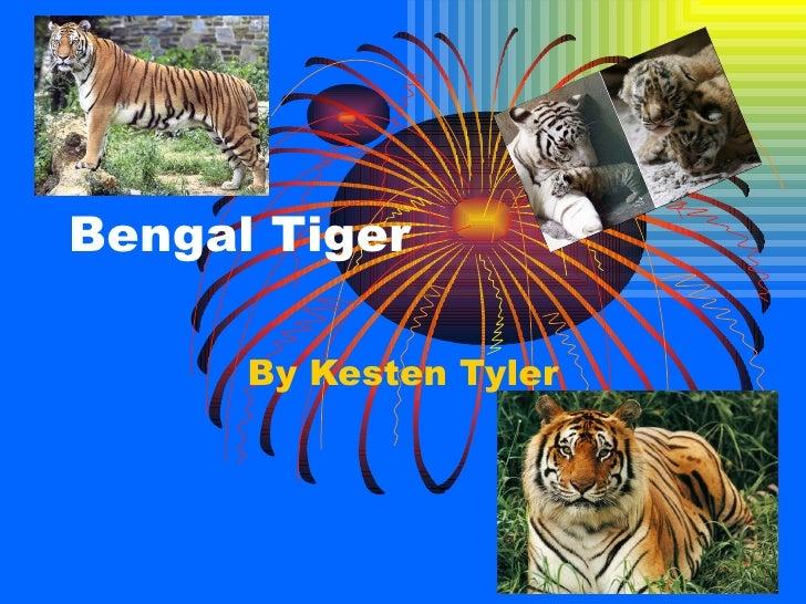 Bengal Tiger By Kesten Tyler