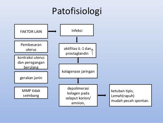 PATOFISIOLOGI KPD PDF